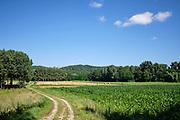 Charmes-sur-l'Herbasse, Drôme, Frankrijk - augustus 2021: Landscahp met bossen en maisveld met uitzicht op het kasteel Charmes sur l'Herbasse. | Charmes-sur-l'Herbasse, Drôme, France - August 2021: Landscahp with woods and cornfield overlooking the castle Charmes sur l'Herbasse.