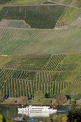 Vineyards on hillside beside Mosel River in Rhineland-Palatinate in Germany