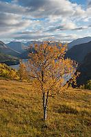 Autumn mountain landscape, Møre of Romsdal, Norway