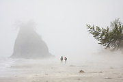 Two backpackers hike through heavy mist along the North Coast, between Chilean and Norwegian Memorial, in Olympic National Park, Washington. A lone sea stack rises in the distance.