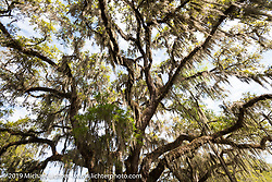 Trees in Ponce de Leon Springs during Daytona Bike Week. FL, USA. March 10, 2014.  Photography ©2014 Michael Lichter.