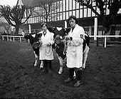 1977 - Bull Show At The R.D.S.Dublin.    (K92)