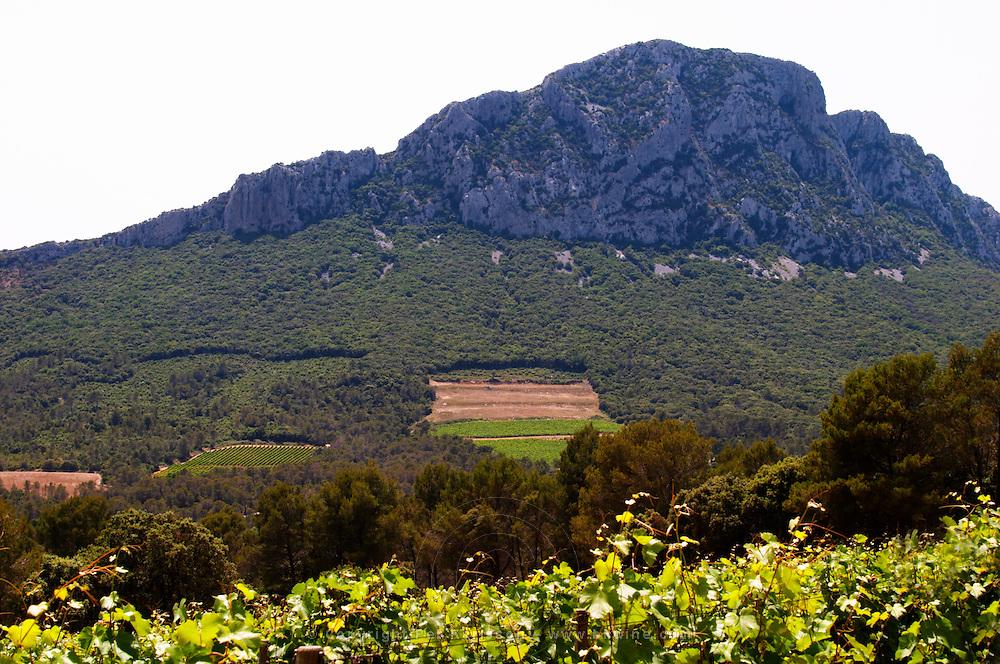 Domaine de l'Hortus. The Pic St Loup mountain top peak. Pic St Loup. Languedoc. France. Europe.
