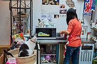 Taïwan, district de New Taipei, Houtong village, Village des chats, bar à chats // Taiwan, New Taipei county, Houtong Cat Village, cats bar
