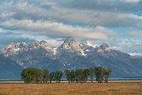 The Teton Range in morning light from Mormon Row, Grand Teton National Park Wyoming