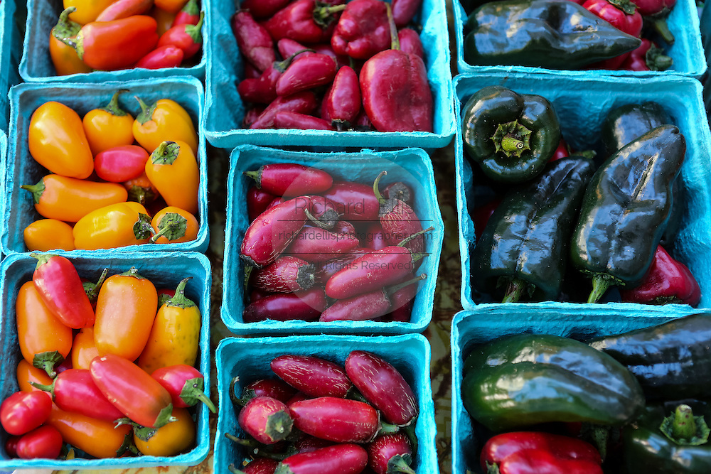 Locally grown chili peppers on display at the Farmers Market along Main Street in downtown Greenville, South Carolina.