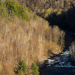 Paper birch trees in early spring on the West River in Jamaica, Vermont.