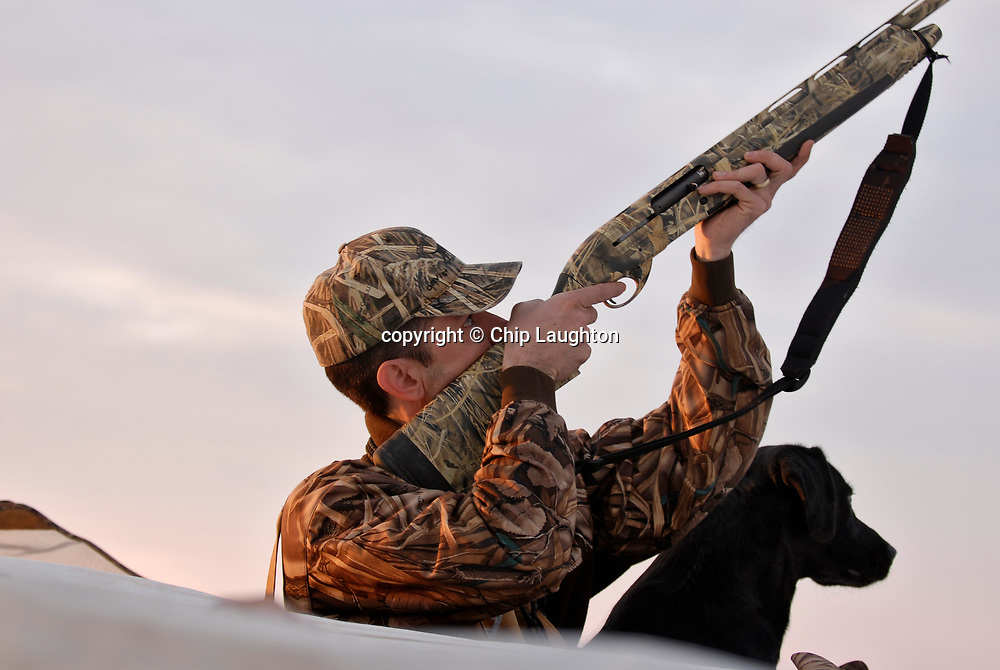 duck goose waterfowl hunting stock photo image photography