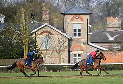 Horses on the gallops at Newmarket Racecourse.