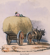 Haycart pulled by oxen. From 'Graphic Illustrations of Animals and Their Utility to Man', London, c1850.