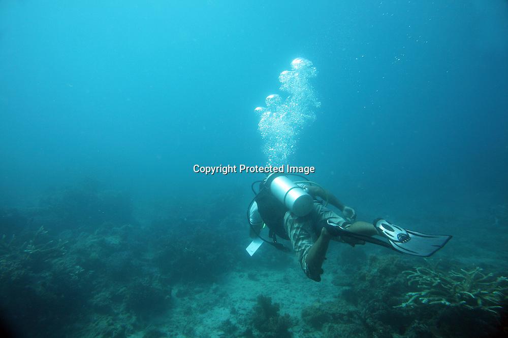 divers at Tuvalu