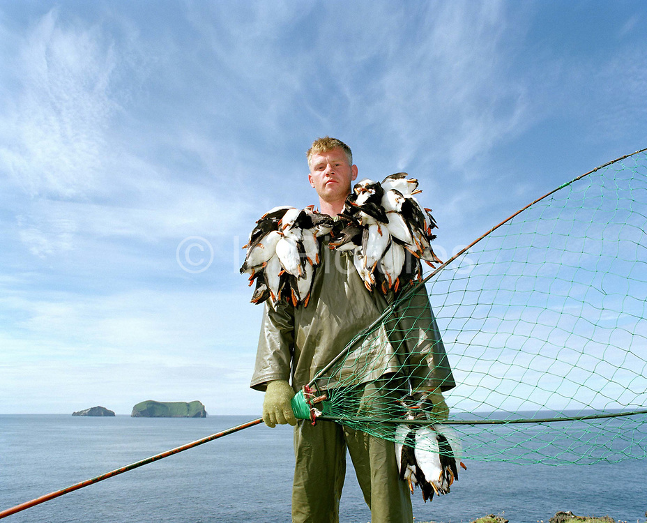 Portrait of puffin hunter Jakob Erlingsson holding the puffins he has caught that day using a net. Puffin hunting has been of major importance in Vestmannaeyjar and during the hunting season of just over 6 weeks every year, some 16,000 puffins were caught to make up Iceland's national dinner. However by 2011 and 2012, breeding failures had taken such a toll that puffin hunting was banned in the Vestmannaeyjar.  In 2013 a five-day puffin-hunting season was allowed at the end of July.