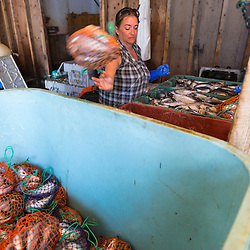 Bait bagger, Rene Adkins, at the Spruce Head Fisherman's Co-op in South Thomaston, Maine.