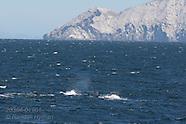 19: SEA CORTEZ SPERM WHALES
