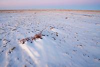 Frozen desert, minus 20 C, Kalamaili National Nature Reserve, Xinjiang, China
