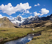 """Horses at Tuctucpampa campground stream below Nevado Jirishanca (left, """"Icy Beak of the Hummingbird"""" 6094 m), Rondoy (right 5870 m). Day 1 of 9 days trekking around the Cordillera Huayhuash, Andes Mountains, Peru, South America. This panorama was stitched from 2 overlapping photos."""