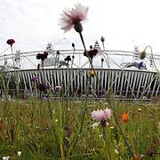Olympic Stadium wildflower meadows
