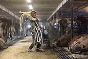 Brooke Hubbard-Sizen struggles pull a utility cart while carrying four milkers to the Green Acres milk house for cleaning after milking the herd in South Randolph, Vt. Wednesday, April 13, 2016. Hubbard-Sizen, who grew up on a Sutton dairy farm, is one of several Vermont Technical College students employed by the Wortmans in exchange for housing. (Valley News - James M. Patterson) Copyright Valley News. May not be reprinted or used online without permission. Send requests to permission@vnews.com.