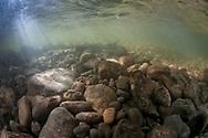 Underwater Scene<br /> <br /> Sean Landsman/Engbretson Underwater Photography