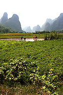 Farmer working in their rice fields. Yangshuo's countryside