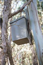 Leadbeater's Possum Nest Box