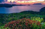 Blossom red flowers over the coast of Milos island
