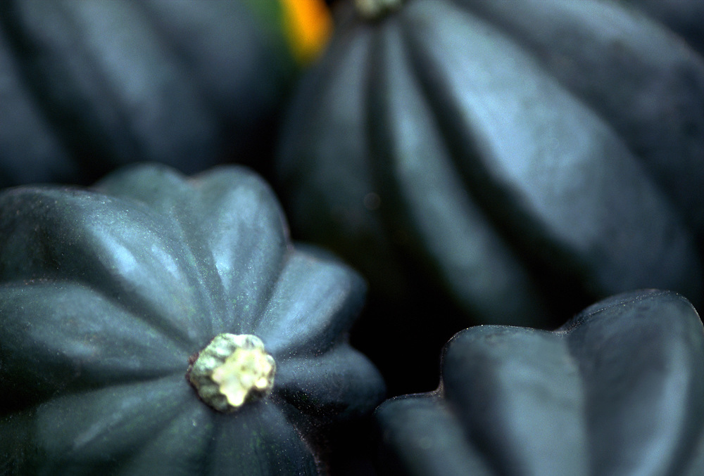 Close up selective focus photograph of a group of Acorn Squash