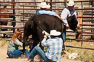 Wilsall Ranch Rodeo, Montana, Wild Cow Milking, The Inlaws and Outlaws Team, Tyler and Garrett Hamm, Jessica Sarrazin, Jaime Wood