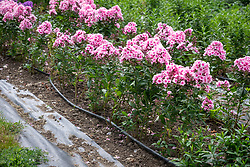 Showing the drip hose irrigation system