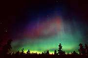 Northern lights (Aurora borealis) and forest<br />