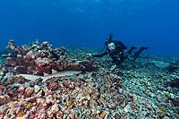 Sylvia Earle with Reef Shark hiding Seychelles