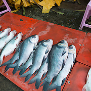 Freshly caught fish laid out for sale at the fish and flower market in Mandalay, Myanmar (Burma).