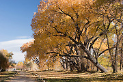 Close-up of entry to Los Luceros with cottonwoods, New Mexico<br />