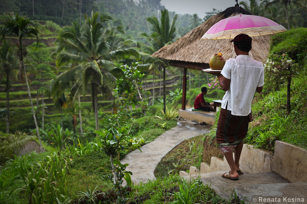 Not even rain stops a traditionally dressed Balinese  waiter from bringing out drinks to a local restaurant guests. The outdoor restaurant sits on a hillside with beautiful views of surrounding rice terraces in the village of Tegallalang.