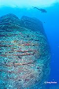 pinnacle at Vertical Awareness dive site, Lehua Rock, off Niihau, Hawaii ( Central Pacific Ocean )