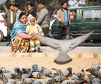 DELHI - Duiven voeren in New Delhi. ANP KOEN SUYK