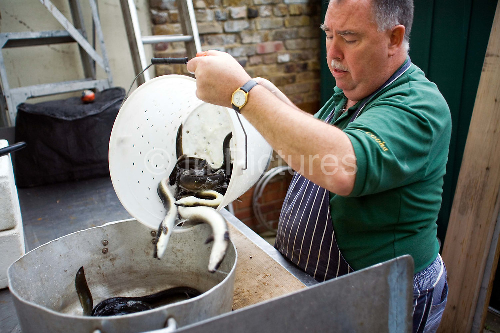 Joe Cooke, sort eels ready to be killed and gutted at the rear of Cookes' Eel, Pie and mash shop in Hoxton, London, UK.Eel, pie and mash shops are a traditional but dying business. Changing tastes and the scarcity of the eel has meant that the number of shops selling this traditional working class food has declined to just a handful mostly in east London. The shops were originally owned by one or two families with the earliest recorded, Manze's on Tower Bridge Road being the oldest surviving dating from 1908. Generally eels are sold cold and jellied and the meat pie and mash potato covered in a green sauce called liquor.