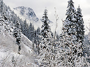 Fog, mist, and early December snow cover trees and mountains at Snoqualmie Pass, Washington, USA.