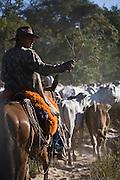 Aquidauana_MS, Brasil...Homem tocando gado na Fazenda Rio Negro no Pantanal...The cowboy herding cattle in the Rio Negro farm in Pantanal...Foto: JOAO MARCOS ROSA / NITRO