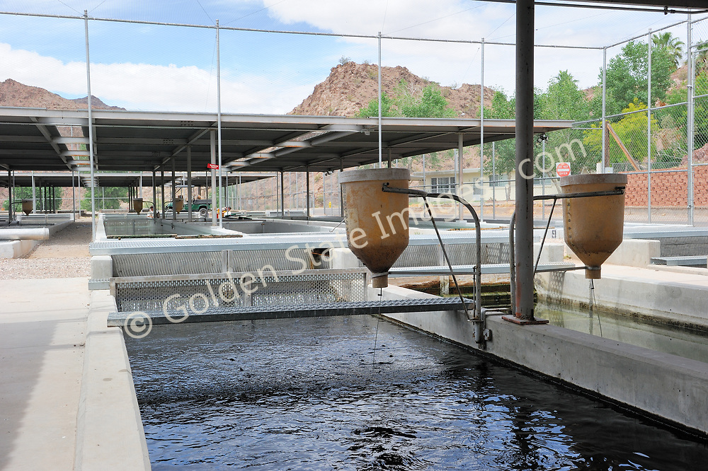 Dry pellet feeders.<br /> <br /> Operated by the US Fish and Wildlife Service.