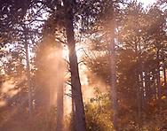 Autumn's Woodland Magic_2016_Heidi Watson