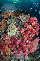 Under a setting sun, colorful Soft Corals and Sea Fans decorate a reef wall<br />  <br /> Shot in Raja Ampat Marine Protected Area West Papua Province, Indonesia