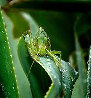 Species unknown