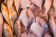 Fresh fish on sale in traditional old Chinese Soho food market in Graham Street, Central Hong Kong, China