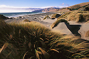 Sand dunes and blowing grass on the beach in Northern California near Petrolia, California. Humboldt County. Lost Coast. Pacific Ocean.