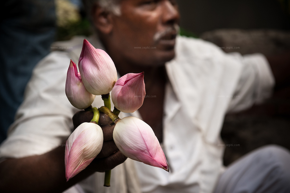 A flower vendor at Connaught Place Phool Mandi (flower market) which takes place every morning in front of the Hanuman Temple. This is the largest flower market in India and one of the biggest in Asia. It begins trading at 4am and disappears without a trace by 9am.