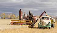 Photo Randy Vanderveen<br /> LaGlace, Alberta<br /> 2015-09-26 <br /> Gary Dixon unloads his Massey Harris combine into Gerald Logan's 1949 Reo  as they harvest  Canada Prairie Spring (CPS) wheat takes place on Gary and wife Shirley's land for the Bear Lake  Growing Project. The grain will be sold and money donated to the Canadian Food Grains Bank. This year the project had a number of groups and individuals from around the South Peace sponsor an acre to cover the input costs so all the money from the grain sold could be donated.