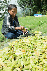Boy shaking out the seeds of a fruit, Nepal