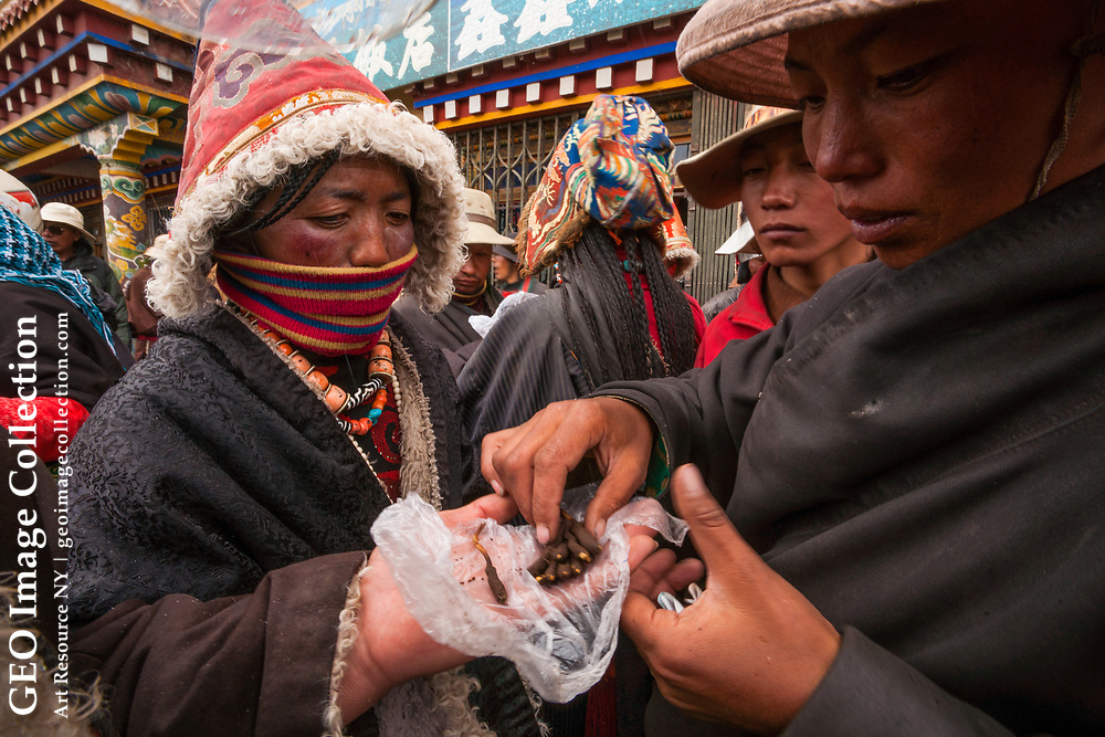 Fresh from foraging for yartsa gombu on the grasslands, this nomad shows some prime specimens to traders. Sichuan, China
