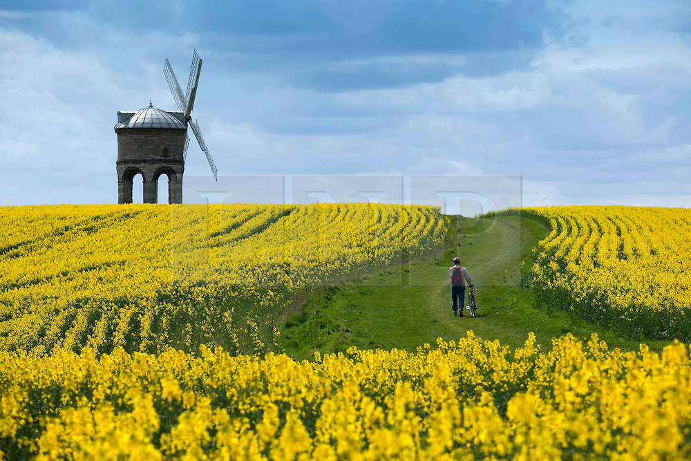 © Licensed to London News Pictures. File picture dated 26/04/2010 Leamington Spa, UK.  Picture of Chesterton Windmill surrounded by  which was entered into the Press Photographer Year book. The Windmill is currently undergoing renovation work. Photo credit : Dave Warren/LNP